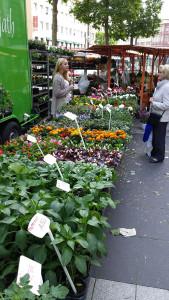 Wochenmarkt_Boulevard__1